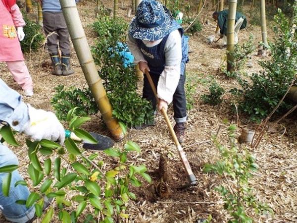 竹の子(筍)掘り