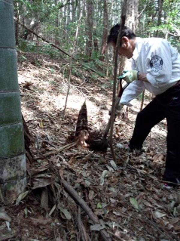 3度目の竹の子堀り
