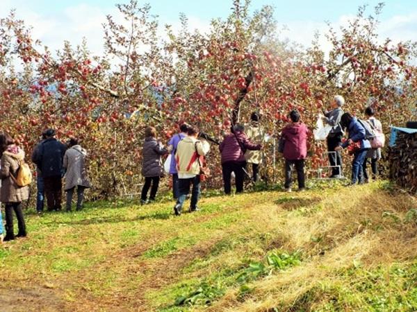今年も、りんご狩りに行きました。