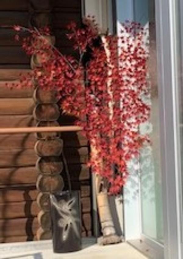 我が院も紅葉しました・・・